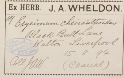 Mr_James_Alfred_Wheldon_1862__1924